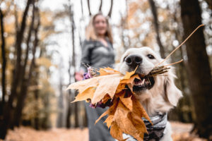 4 października Światowy Dzień Zwierząt – Z myślą o zdrowiu naszych czworonożnych przyjaciół